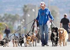догситтеры для собак